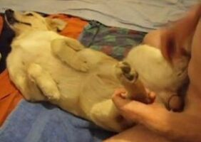 Brasileiro comendo cadela